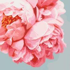 """Картина за номерами """"Рожеві піони"""" 40*40, Ідейка КНО3035"""